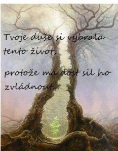 Strom aduše