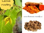léčivé rostliny - kurkuma, lapacho